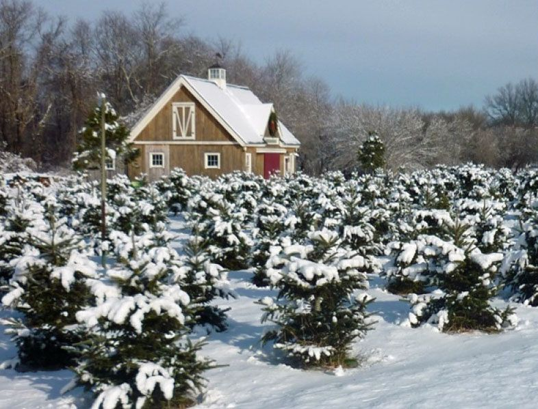 24 36 Christmas Tree Barn Yankee Barn Homes Barn Barn Homes Floor Plans