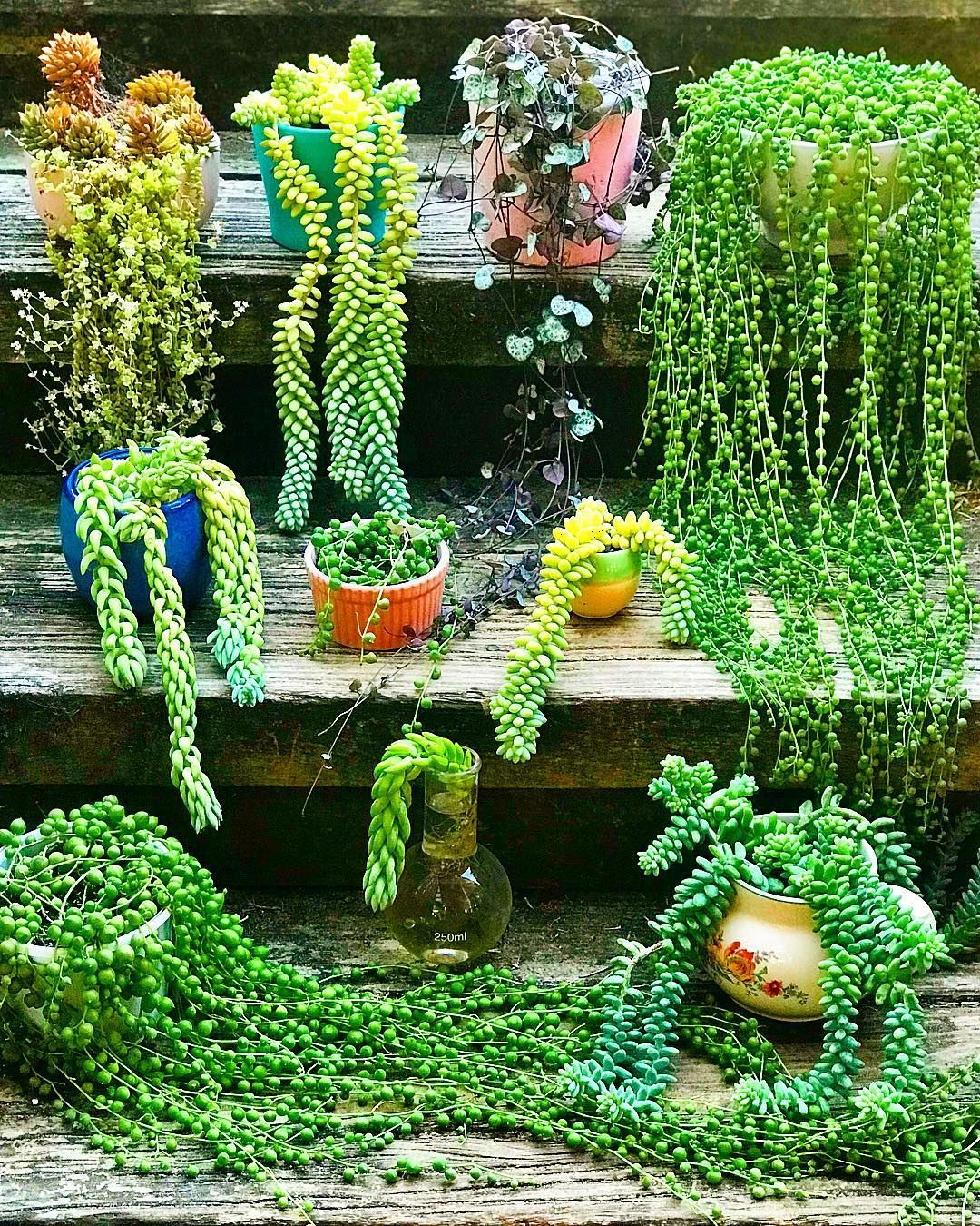 23 Types Of Succulents Amp How To Care It For Beginners
