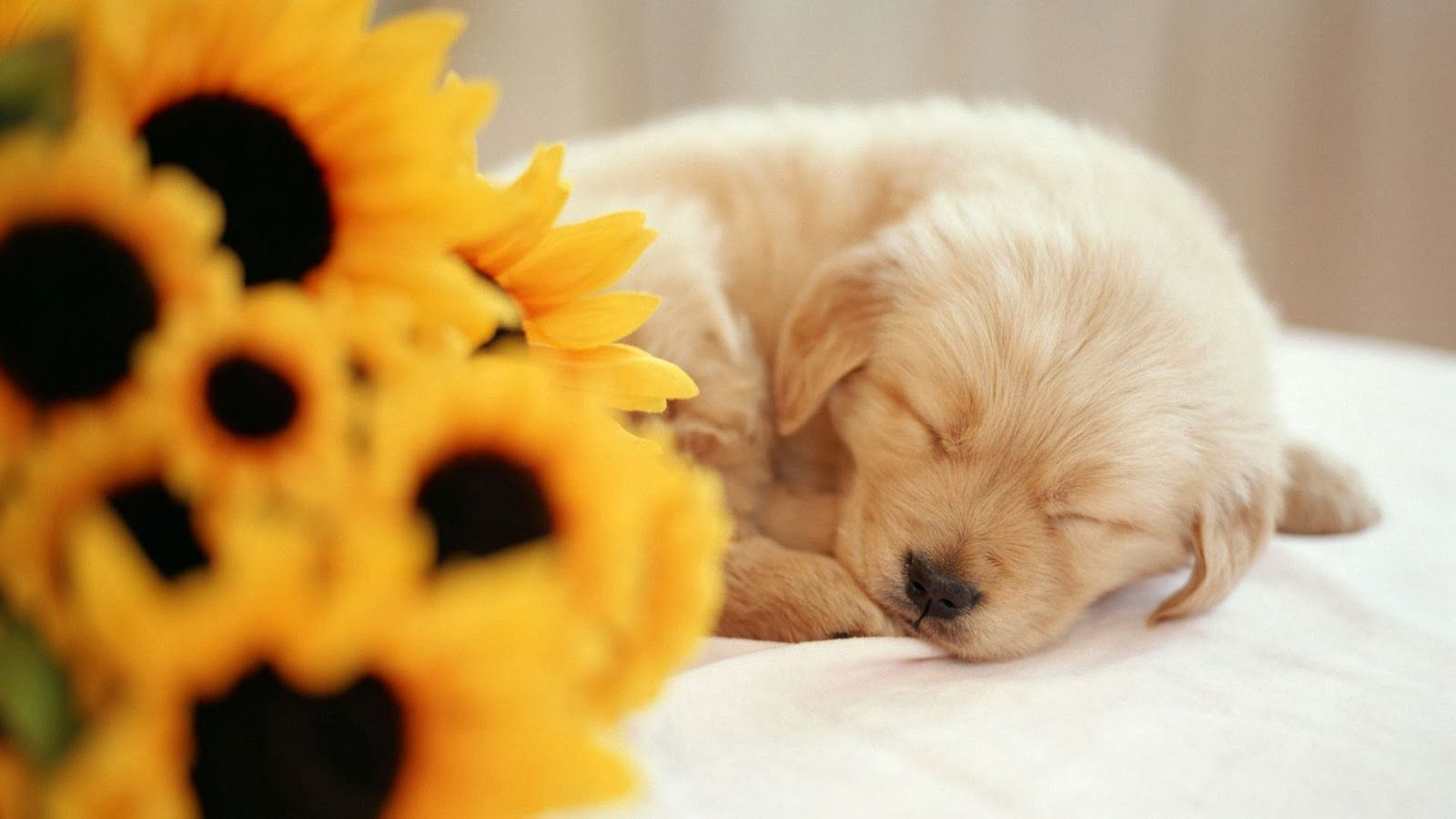 Found On Bing From Hdwallzpaperz Blogspot Com Very Cute Puppies Cute Puppy Wallpaper Very Cute Dogs