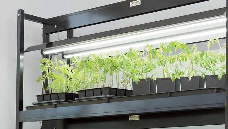 Gardening Under Grow Lights Growing Orchids Indoor Grow 640 x 480