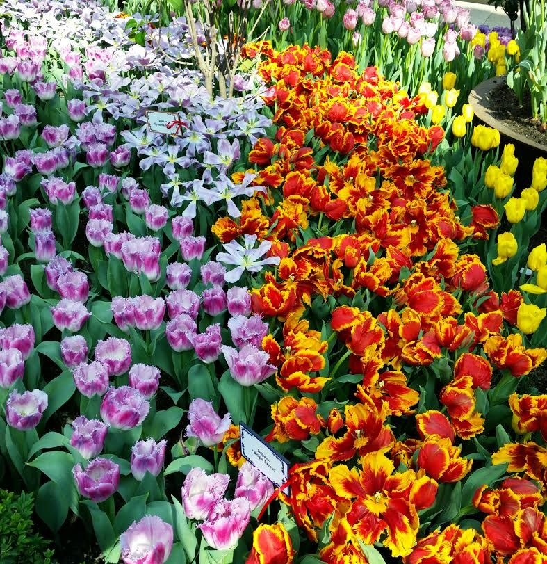 Tulipmania 2015, Gardens by the Bay