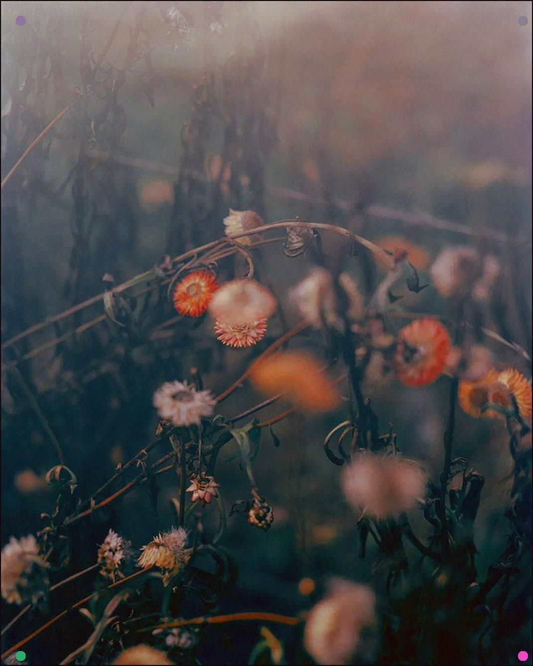 Nich Hance Mcelroy in 2020 Growth and decay, Flowers for