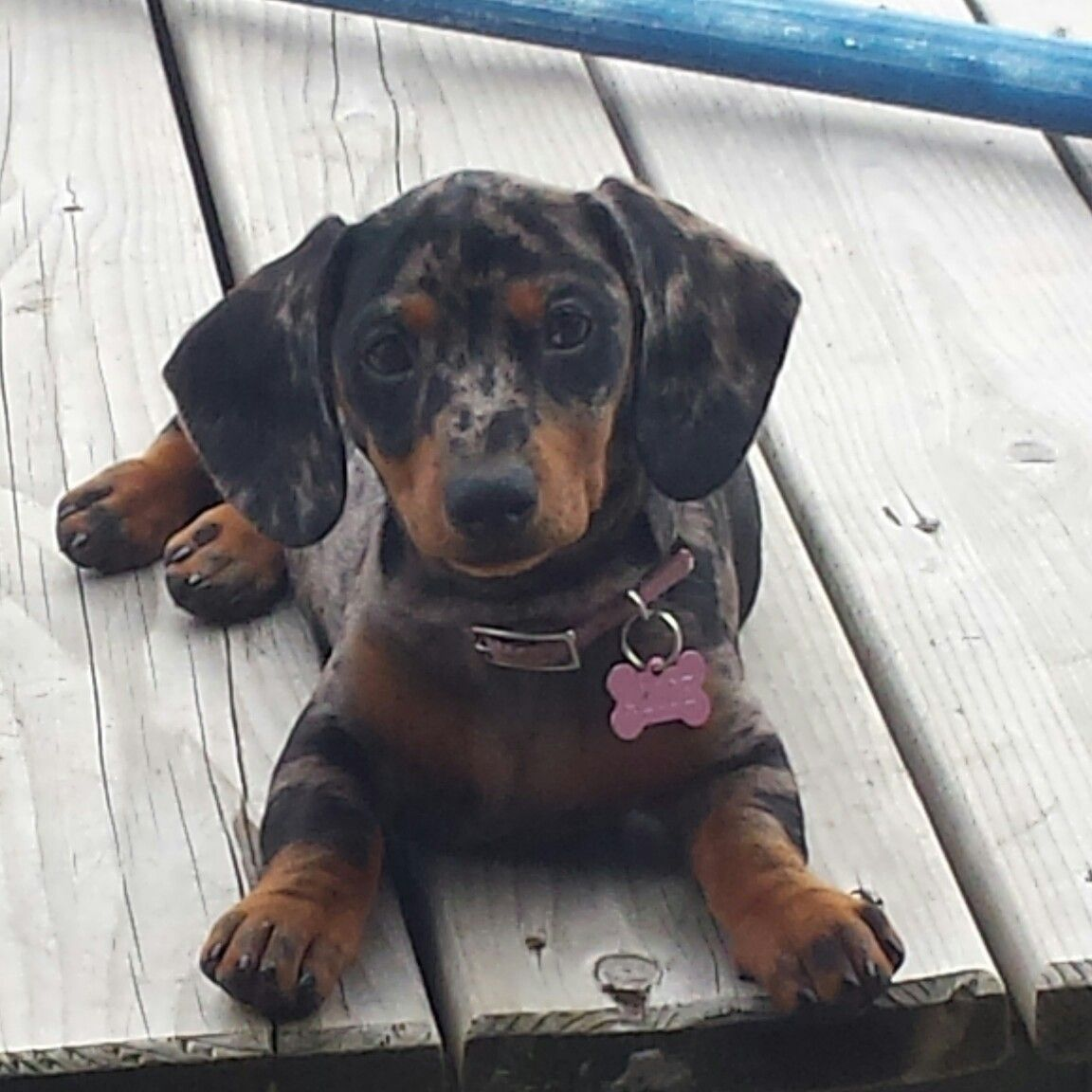 Thatus muy girl alice toutous pinterest alice and dachshunds