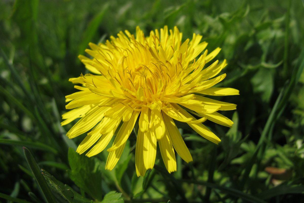Namesofflowers Flowers Names Flowers Of All Kinds Pinterest