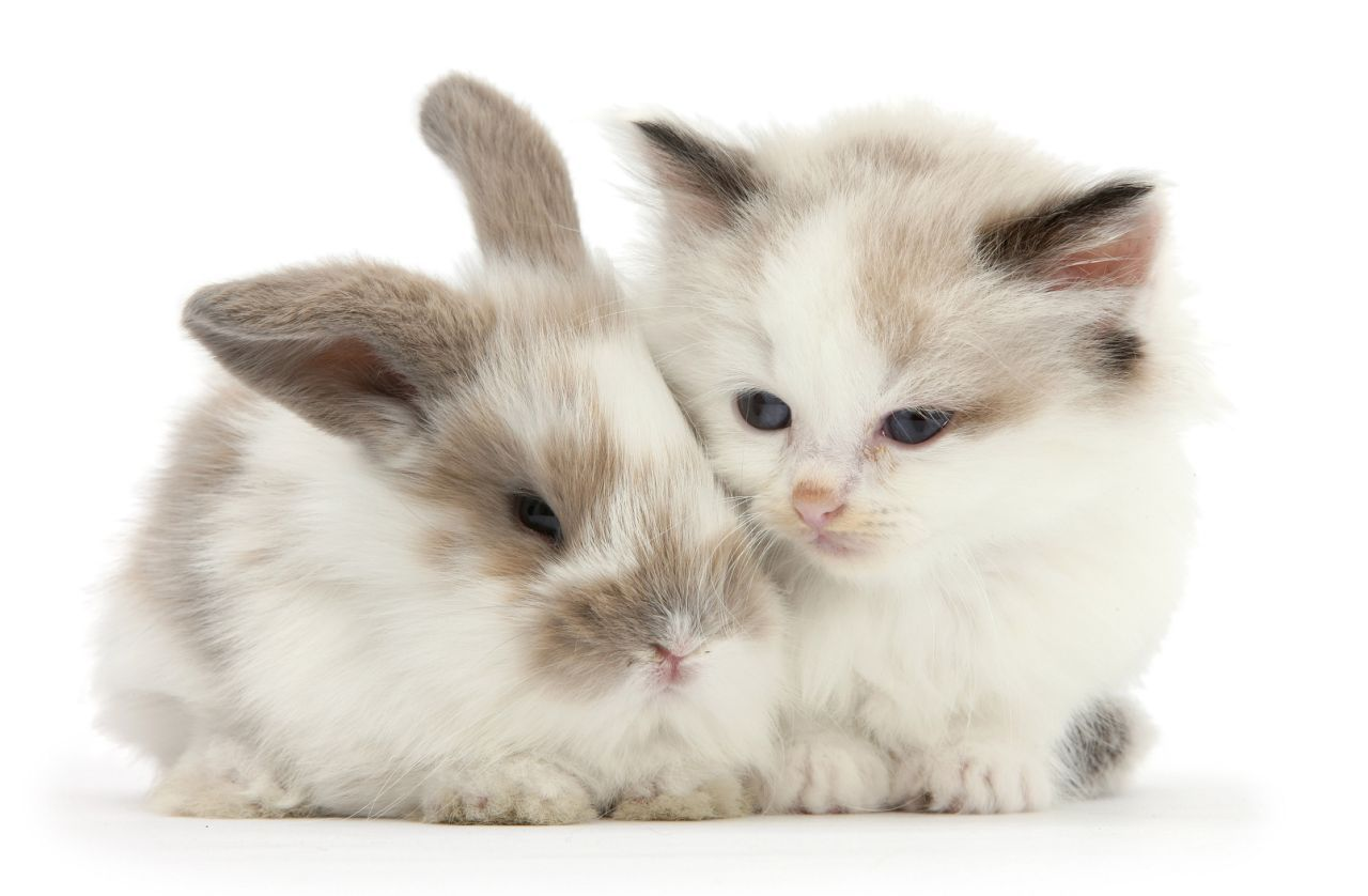 Snapcat Felines And Bunnies Look Exactly The Same Baby Cats Cute Animals Pets