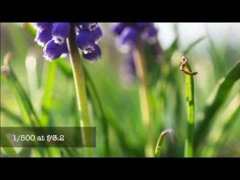 Lense Nikon 40Mm F2.8G Micro Dx Af-S 52M – PDC online FOTO IMAGEN