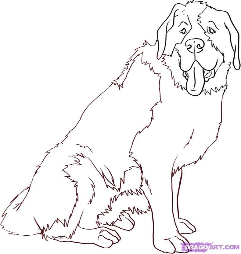 st bernard cartoon dog google search dog art pinterest