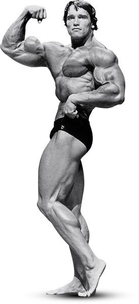 Arnolds blueprint for mammoth shoulders and arms culturismo y arnolds blueprint for mammoth shoulders and arms malvernweather Choice Image