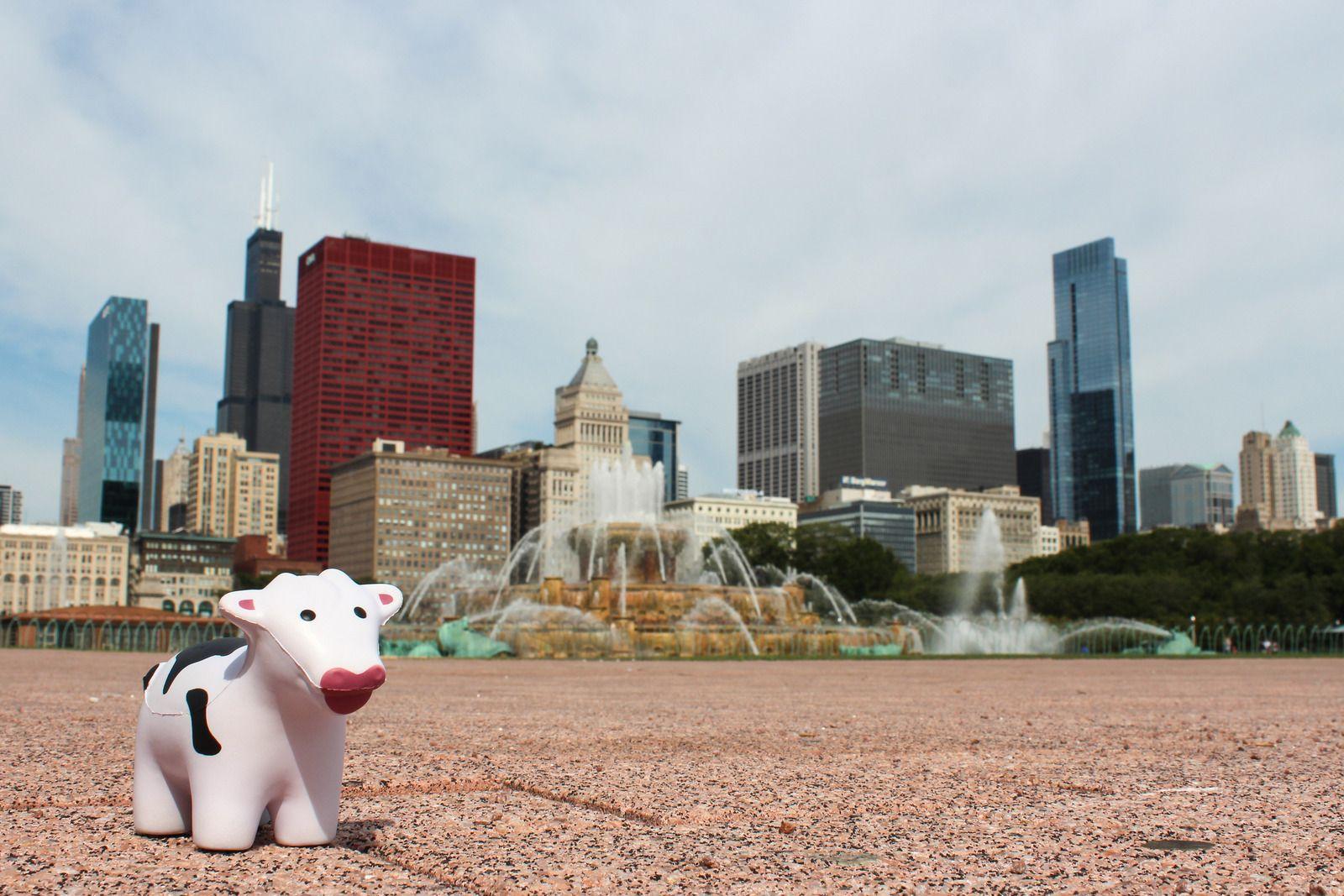 Buckingham Fountain: Chicago, IL