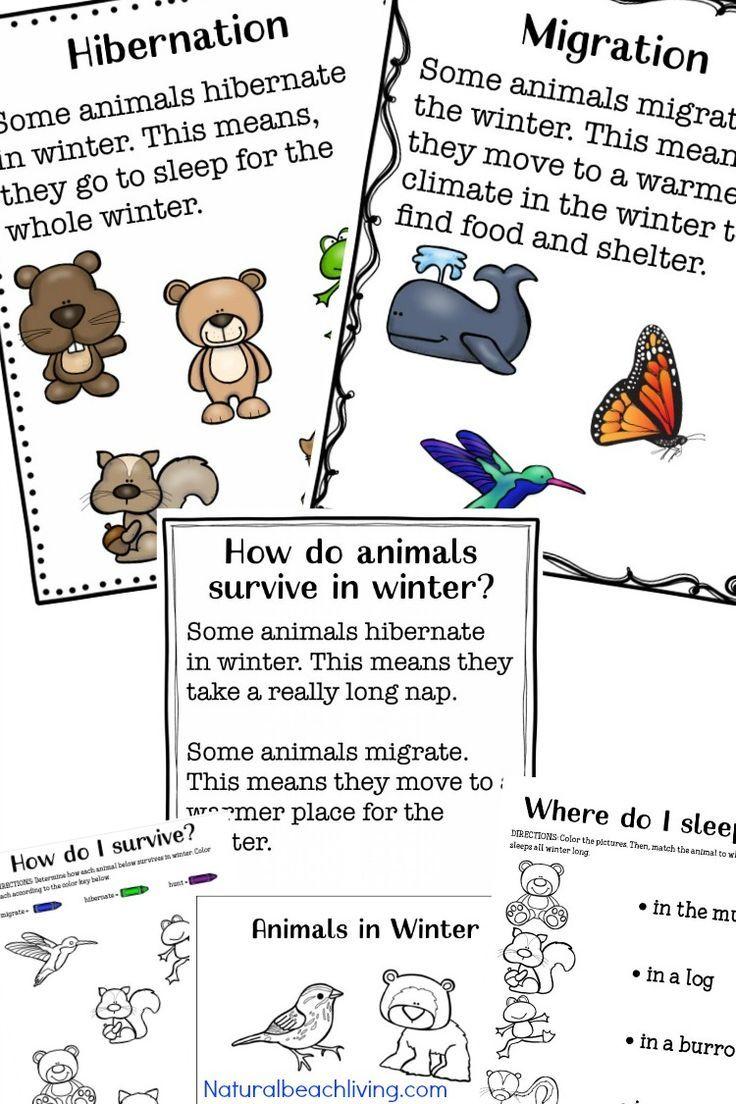 You Ll Love These Winter Animals For Preschool Ideas Hibernation Preschool Activities Winter Animals Preschool Winter Theme Preschool [ 1104 x 736 Pixel ]