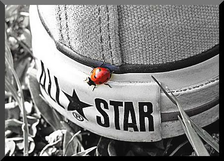 Photography color splash converse all starconverse girlswhite