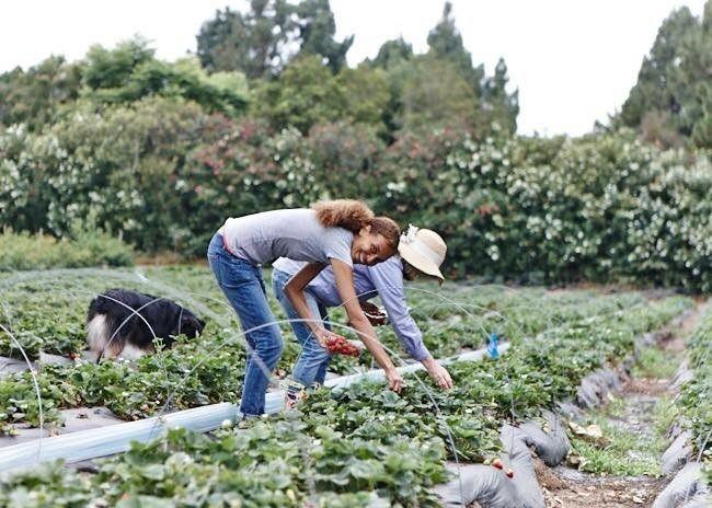 The Simple Life: Malibu Farm Cafe | Malibu farm, Malibu ...