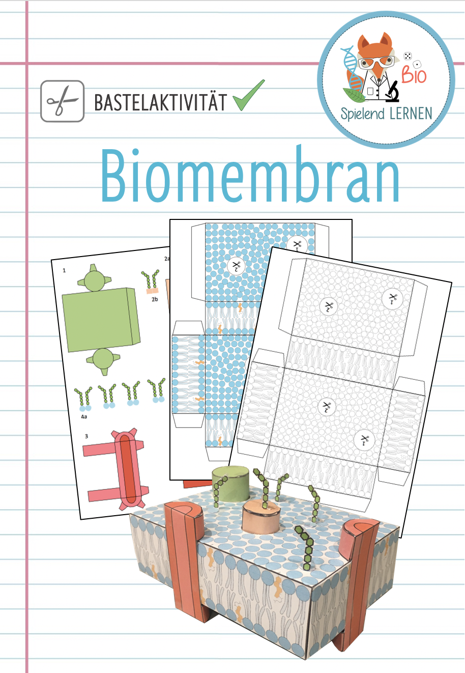 Biomembran Modell Bastelaktivitat Unterrichtsmaterial Im Fach Biologie In 2020 Biologie Unterrichtsmaterial Zelltheorie