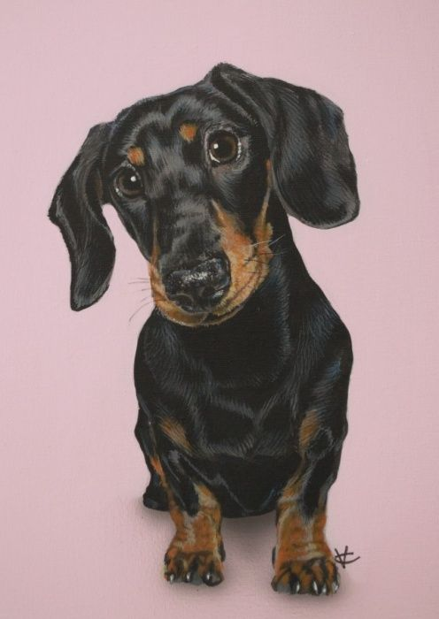 I Just Love Dachshunds And This Beautiful Little Girl Is Just Like