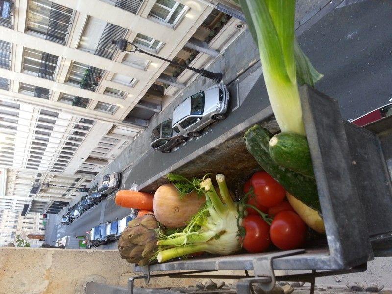 légumes au balcon par Douce 11 ans Paris