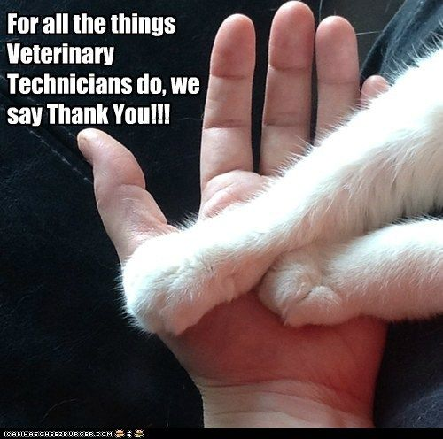 Happy Nat L Vet Tech Week Veterinary Technician Week Vet Tech Veterinary Technician