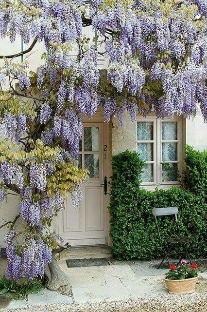 glycine entr e front porch pinterest glycine jardins et ext rieurs de maison. Black Bedroom Furniture Sets. Home Design Ideas