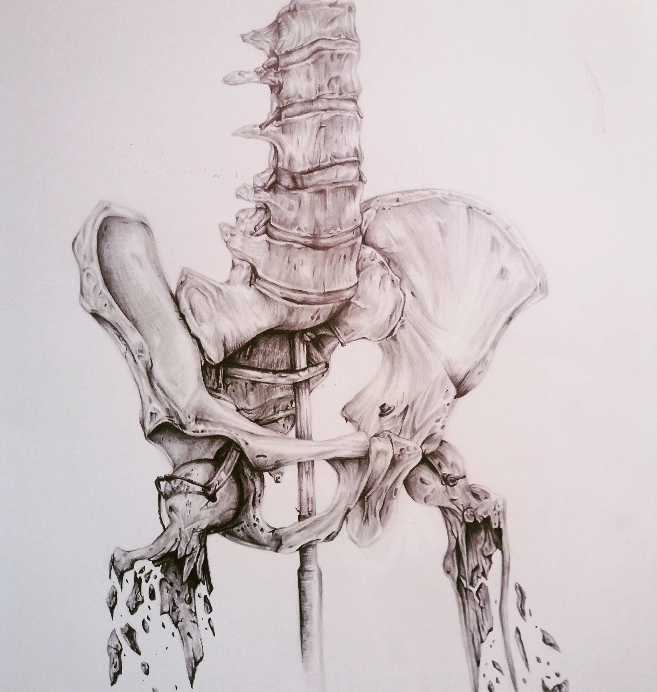anatomy pencil drawing anatomy humanbody art pencildrawing