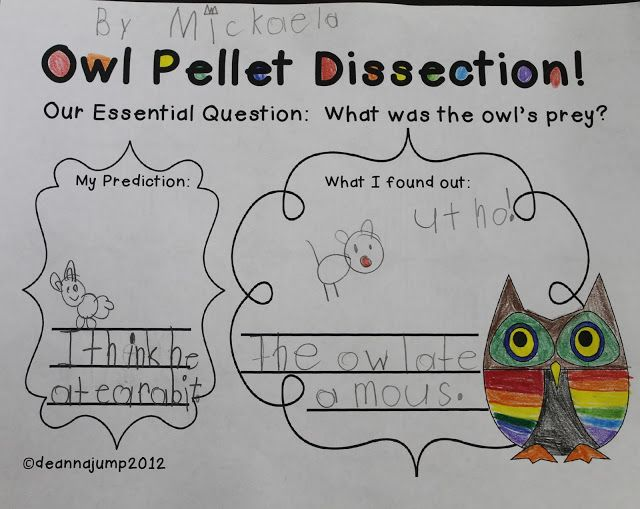 Mrs Jump's class: It's Owl Right! Owl fun and Freebie!