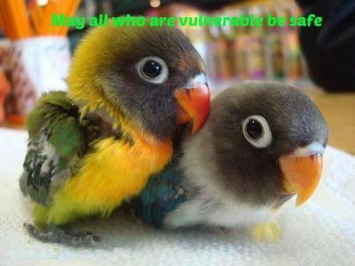 Bellissimi pappagalli