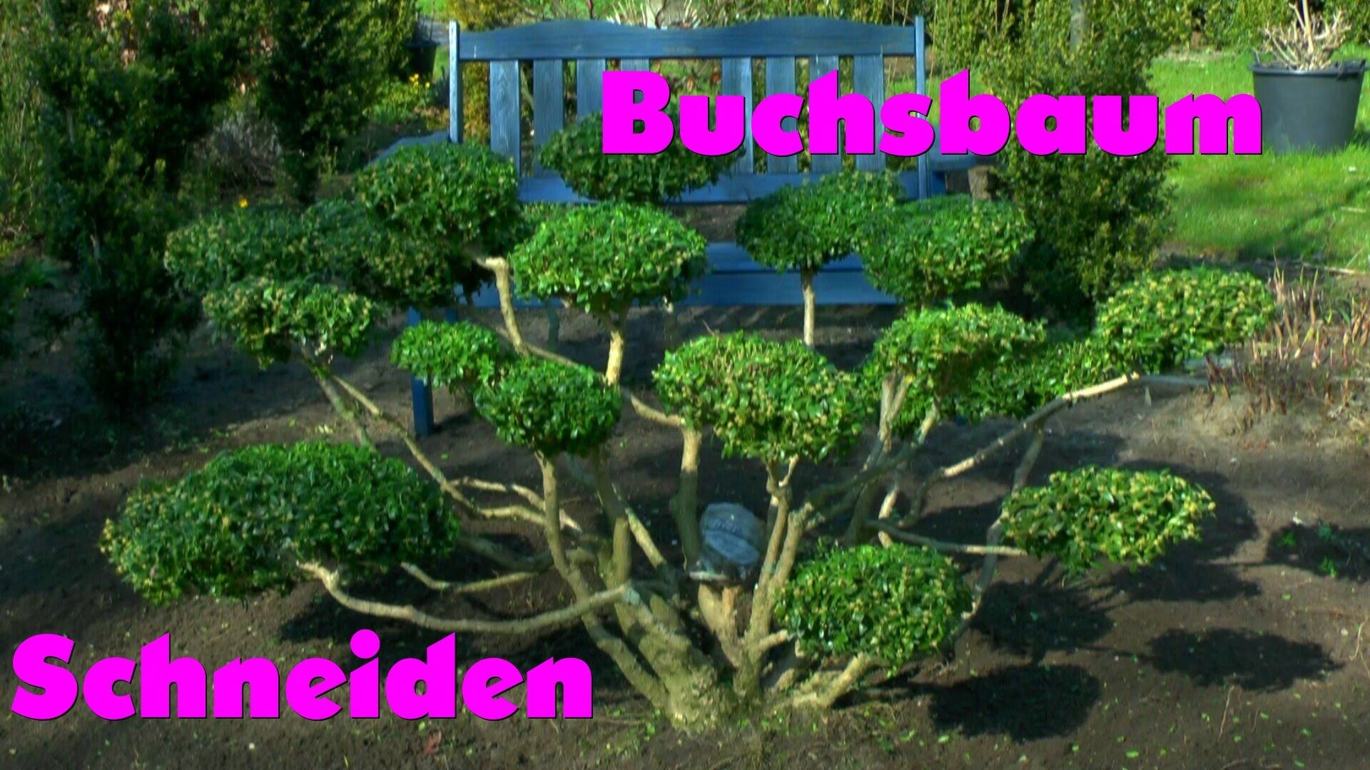 buchsbaum buxus boxwood neu gestalten re style 2. Black Bedroom Furniture Sets. Home Design Ideas