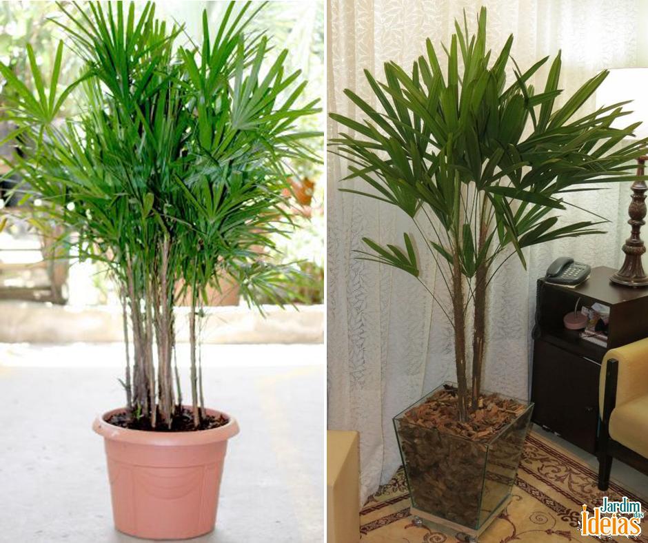 est procurando por uma planta para usar no paisagismo