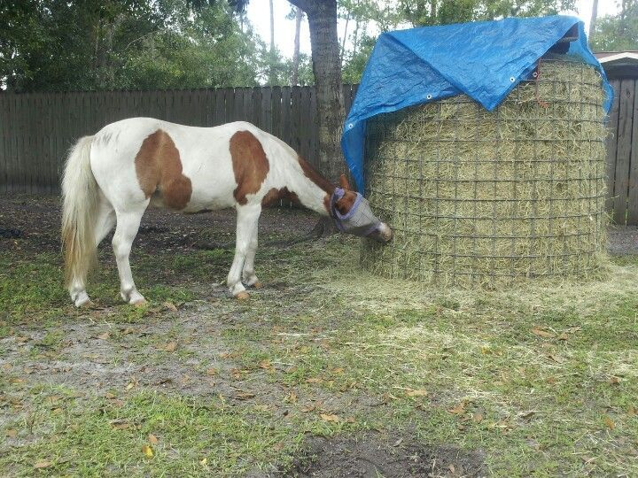 """""""round bale"""" - Google Search   Horse shelter, Horse hay"""