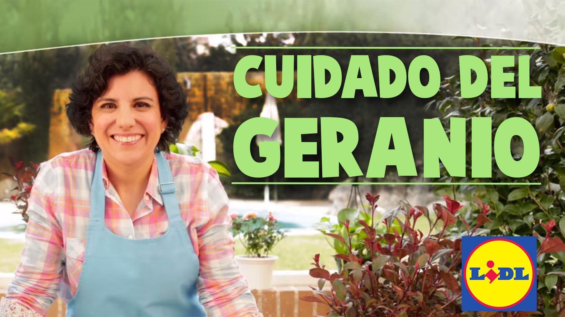 Cuidado Del Geranio - Lidl Jardin