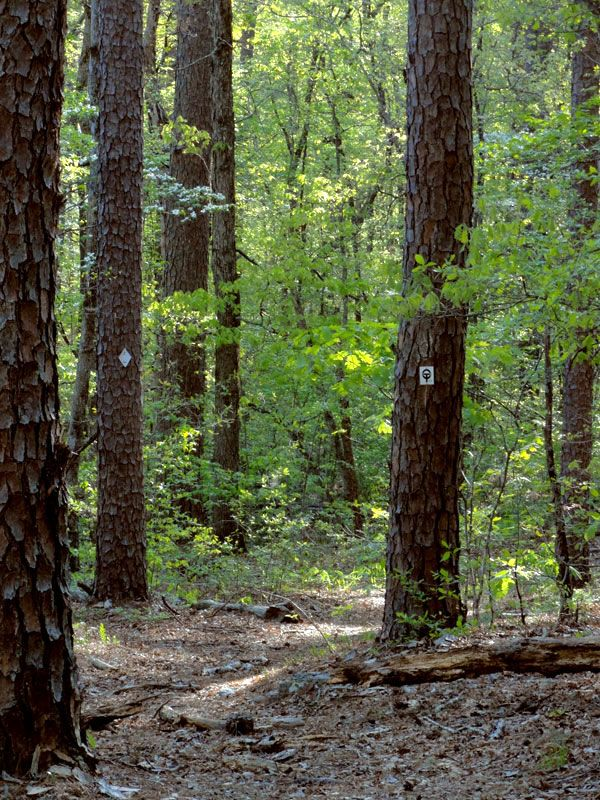 Near the end of hiking the 19 mile Victory section of the Ozark Trail Saturday, May 3, 2014.