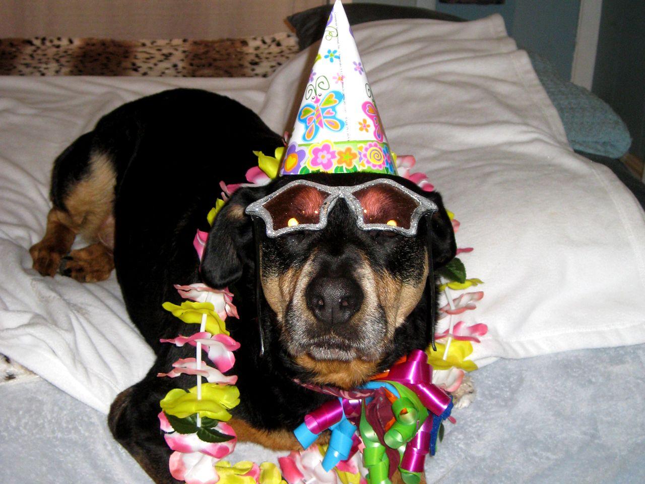 шепелев день рождения у собаки поздравление фото будет неправильно думать