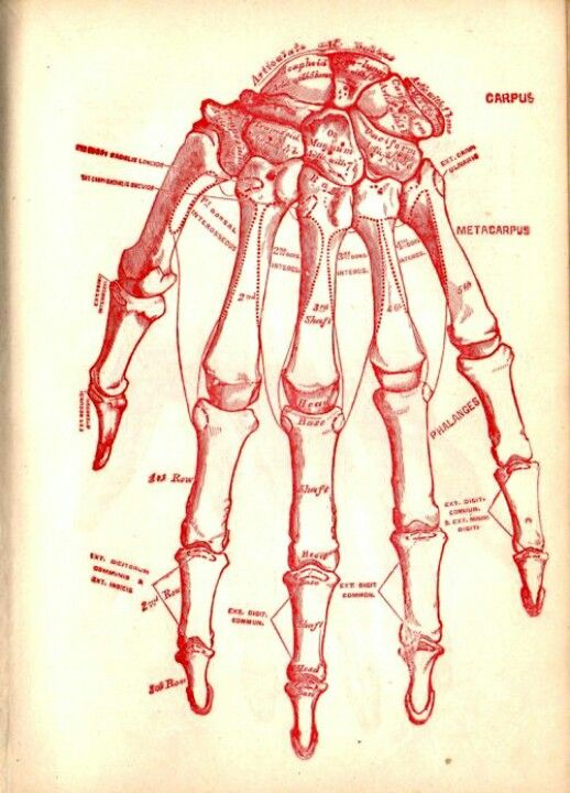 Victorian illustration of the hand