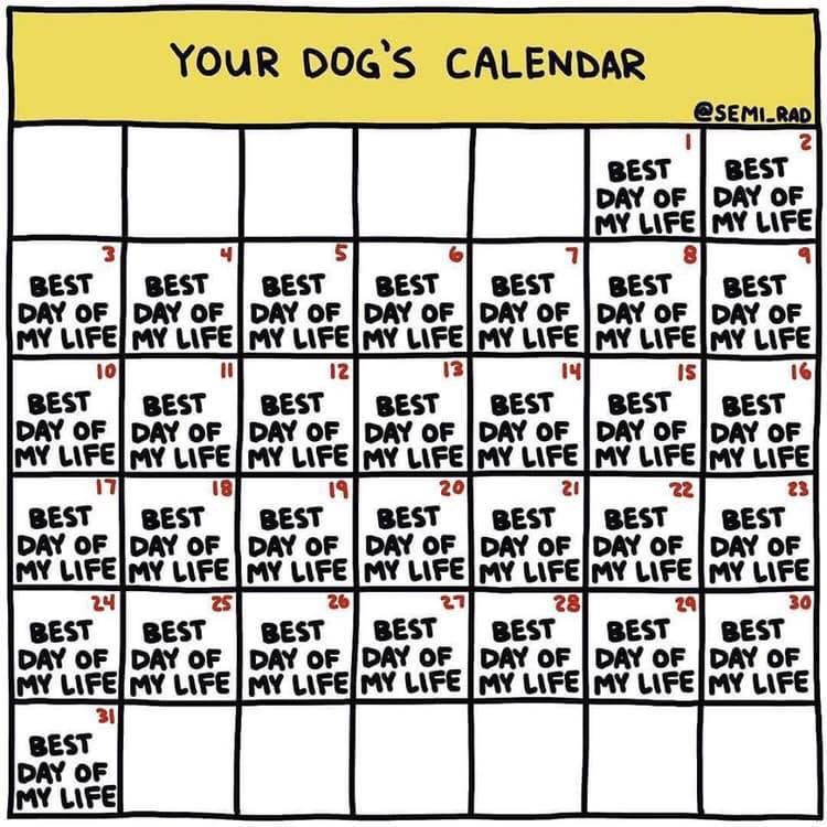 Your Dog S Calendar Dogs Meme Humor Jokes Dog Calendar Life Humor Happy Birthday Quotes Funny