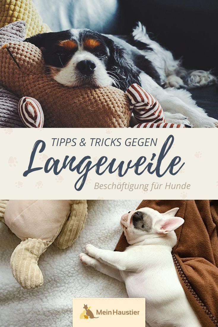 Photo of Actividades para perros: ¡buenos consejos para hacerlo tú mismo!