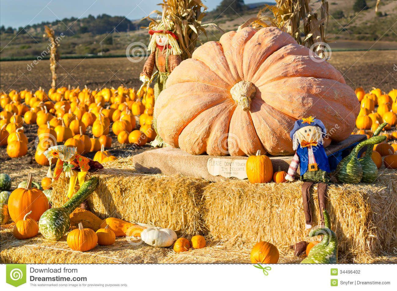 half moon bay pumpkin festival 2013 pumpkin festival in
