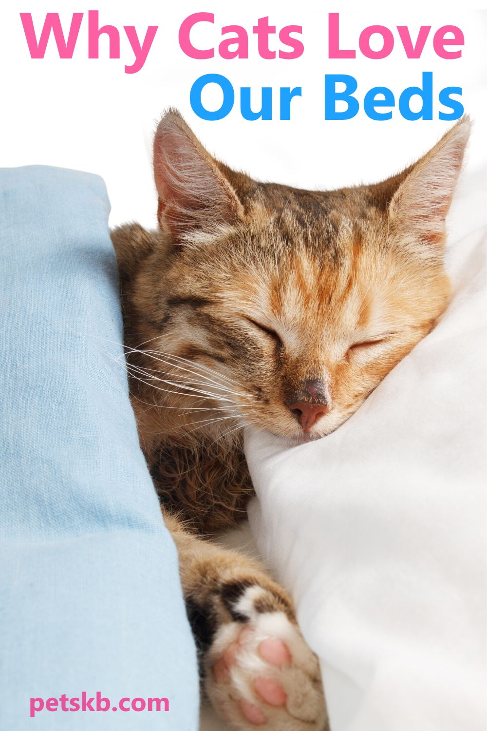Why Do Cats Love Our Beds In 2020 Cat Parenting Cats Cat Behavior