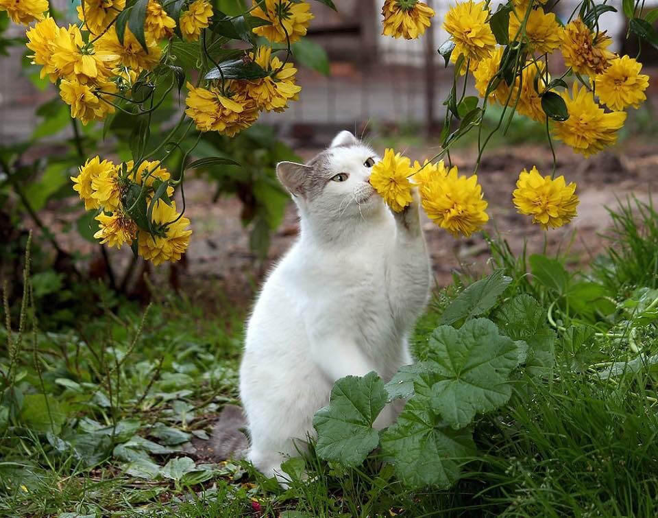 Beautiful Cat playing  in her flower garden.