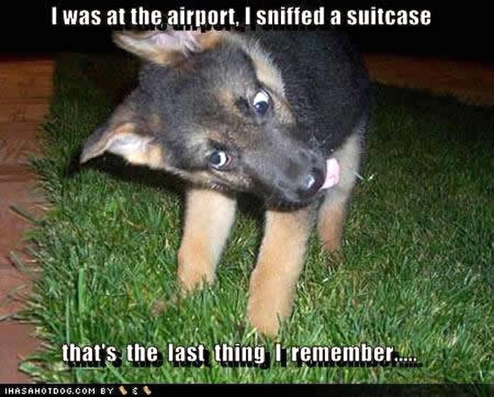 Drug Dog Funny Animal Photos Funny Animals Cops Humor