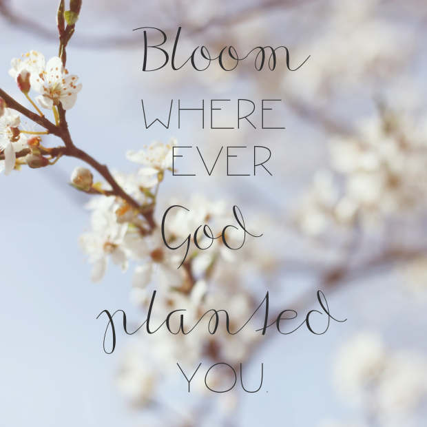 Bloom where ever God planted you