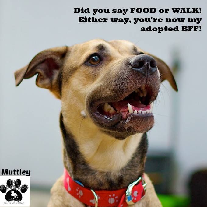 Muttley Has The Most Beautiful Nature And Heart Your Best Friend Fostered In Brisbane Adoption Fee 375 For More Information Ema Dogs Rescue Dogs Adoption