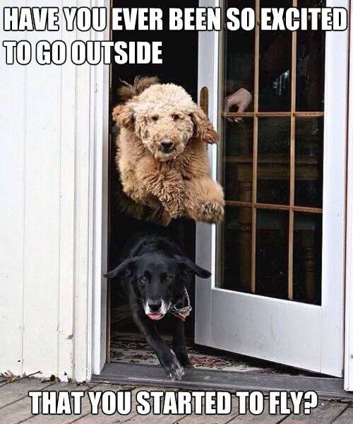 Funny Memes About Excitement Baby Dogs Cute Animals Cute Dogs