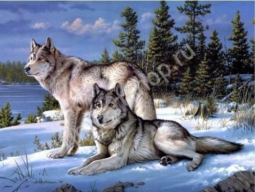 Пара волков зимой Набор для творчества: картина раскраска ...