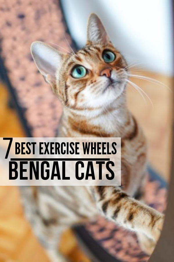 Here we will highlight the 7 best exercise wheels we found