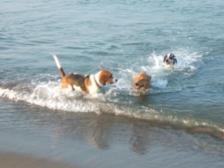 cani in mare 2