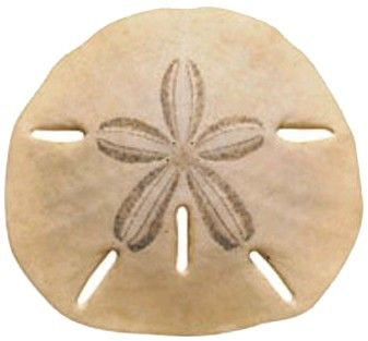 Pin By Kim Yager Gilchrist On The Sea Sand Dollar Tattoo Sea