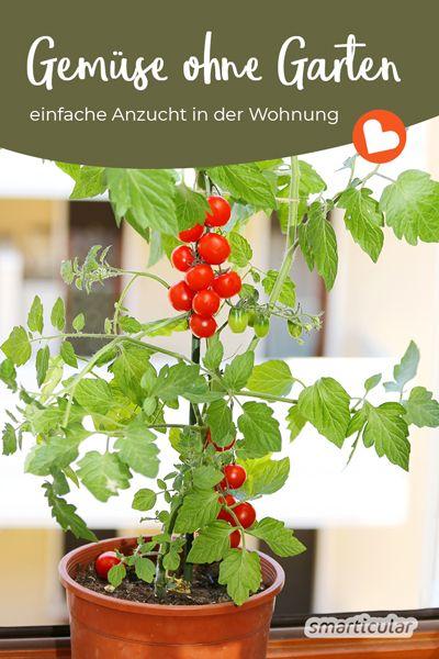 Gemüse in der Wohnung anbauen: Dieses Gemüse kannst du auch drinnen ziehen