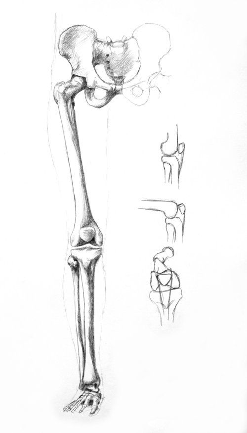 Pin By Daniel Reedy On Drawing References Anatomy The Leg