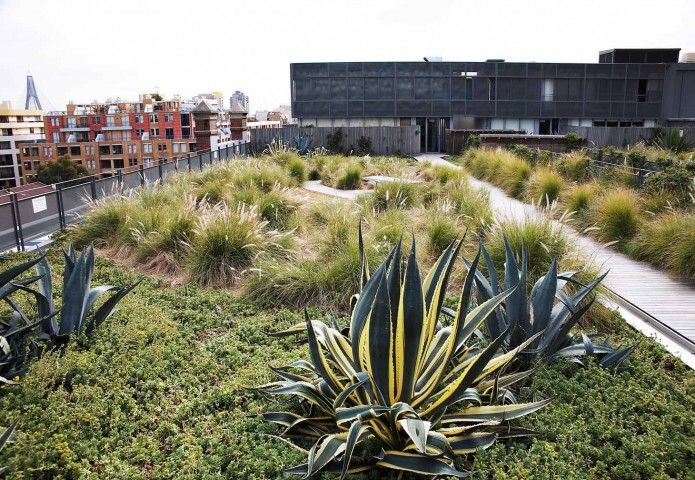 Architecture Interior Photography By Michael Wee Australia Green Roof Sedum Roof Rooftop Garden