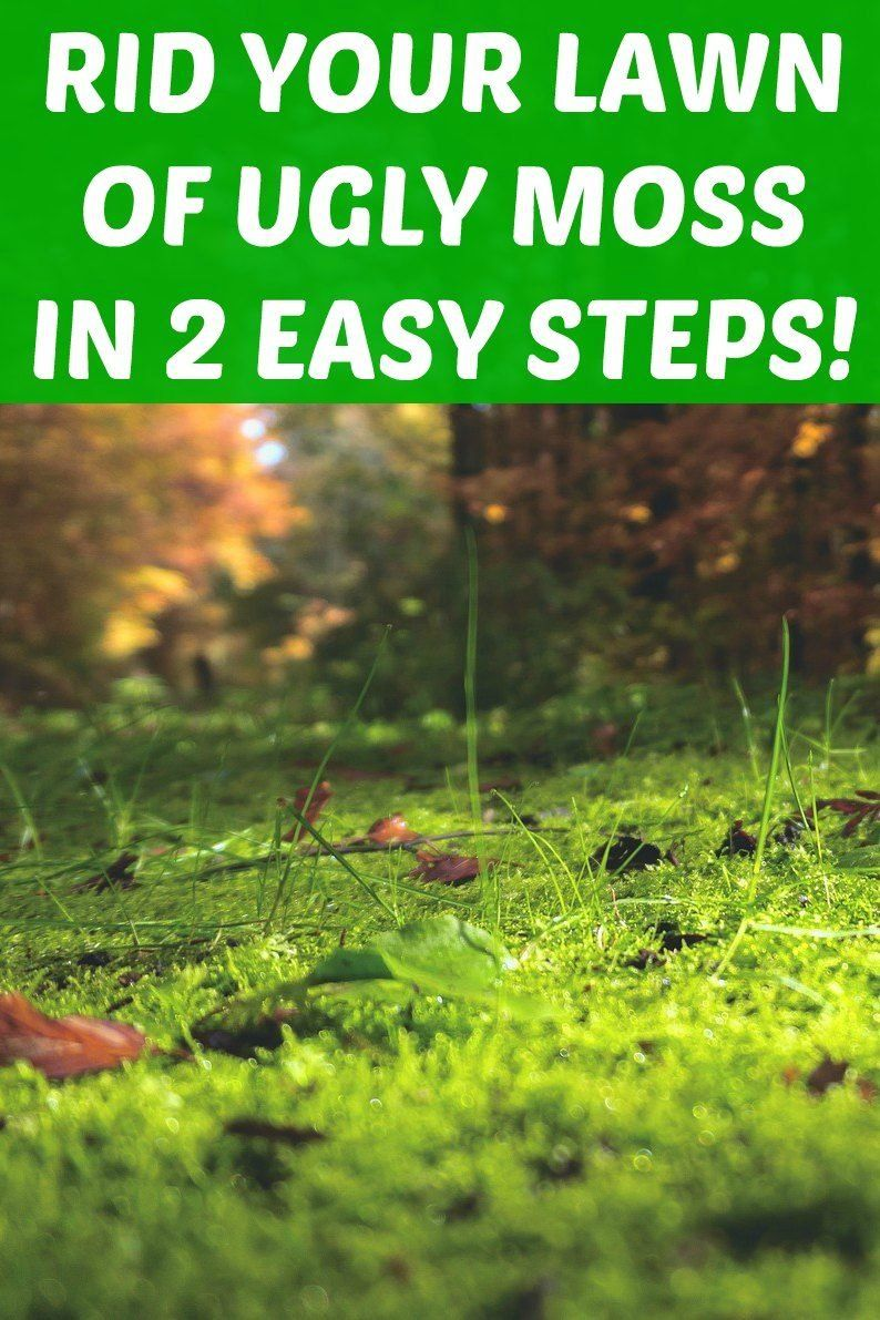 3f3aa5179451fd36266f298b63aa5184 - How To Get Rid Of Moss In Grass Naturally