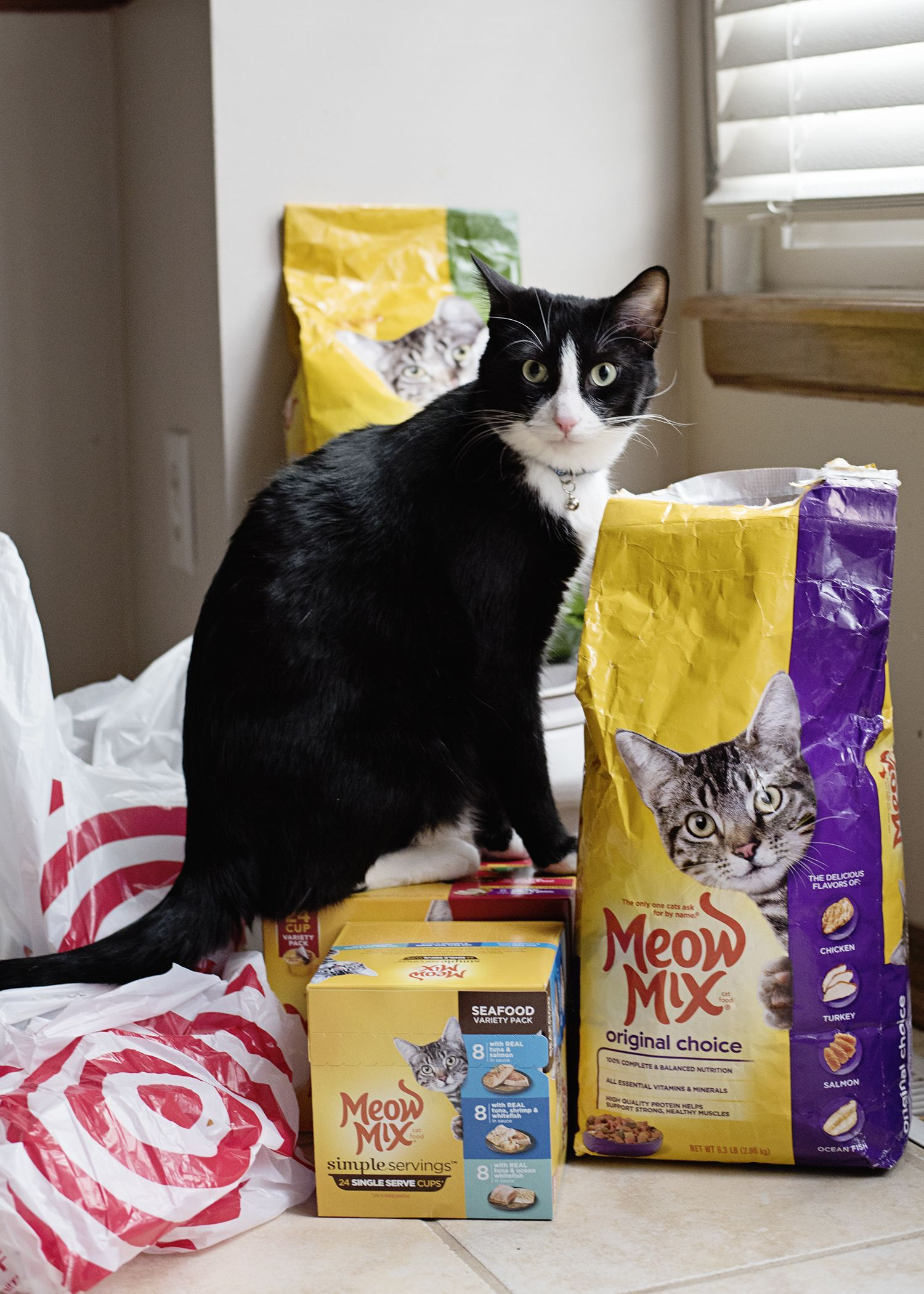 How I got my picky cat to love food again with the Meow