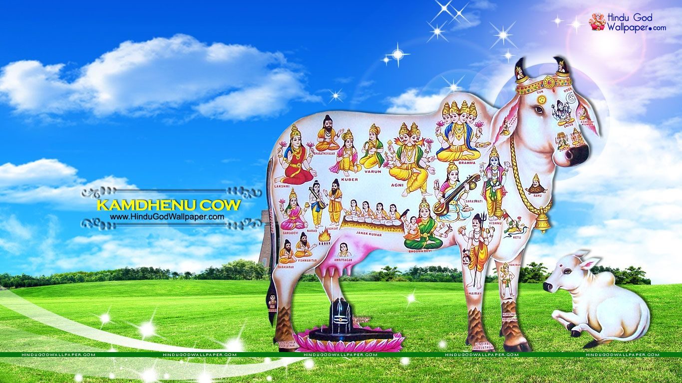Kamdhenu Cow Wallpapers Pictures Images Download Hindu Goddess